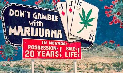 marijuana legal sports betting odds on April 20, 2020 during the coronavirus pandemic