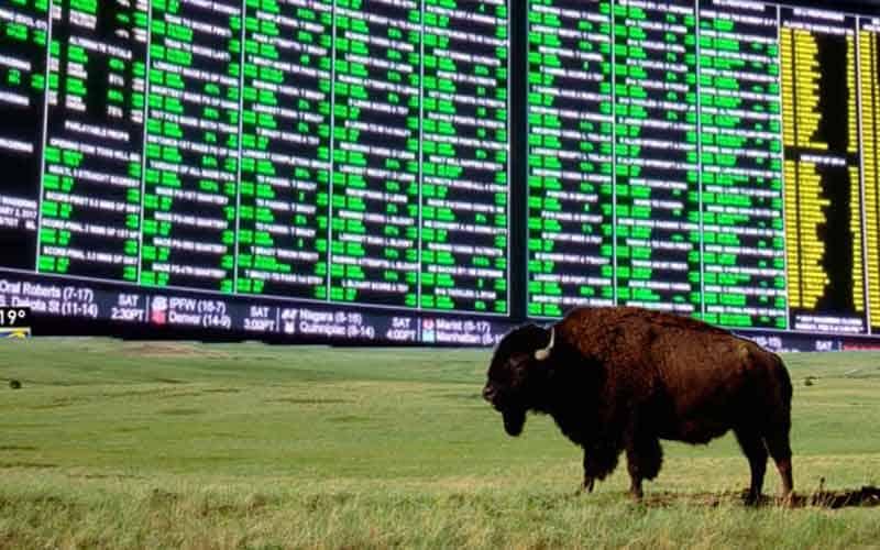 North Dakota sports betting looming over the horizon as a buffalo roams